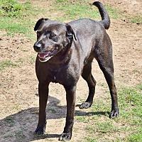 Adopt A Pet :: Bolt - Iola, TX
