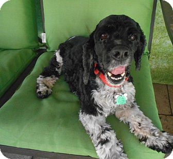 Collie Dog for adoption in Kannapolis, North Carolina - Truman -Adopted!