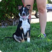 Adopt A Pet :: Jaeger - Meridian, ID