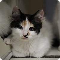 Adopt A Pet :: Ava - Richmond, VA