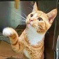 Adopt A Pet :: MORIS - Hampton, VA