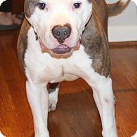 Adopt A Pet :: Courage - Columbia, TN