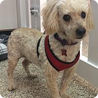 Adopt A Pet :: Gaston - Thousand Oaks, CA
