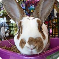 Adopt A Pet :: Bill Bailey - Alexandria, VA