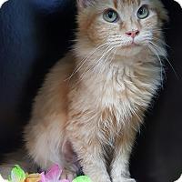 Adopt A Pet :: Muffitt - Albemarle, NC