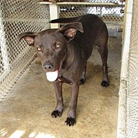 Adopt A Pet :: Jed - Staunton, VA