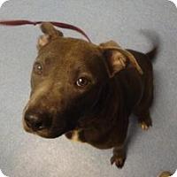 Adopt A Pet :: Buddy - Gainesville, FL