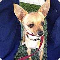 Adopt A Pet :: Jem - Mission Viejo, CA