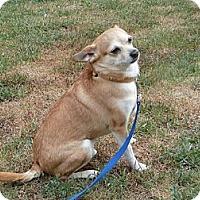 Adopt A Pet :: Freddy - Stroudsburg, PA