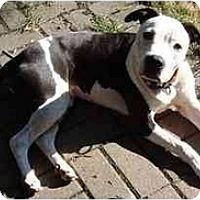 Adopt A Pet :: Goober - Chicago, IL