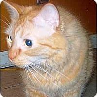 Adopt A Pet :: O'Reilly - Summerville, SC