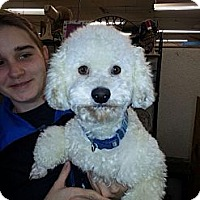 Adopt A Pet :: Buffy - Kingwood, TX