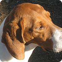 Adopt A Pet :: Willow - Harrisburgh, PA