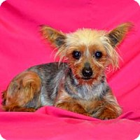Adopt A Pet :: Phoebe - Canton, IL