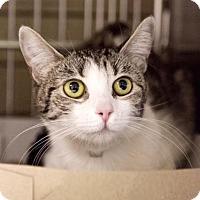 Adopt A Pet :: Maycee - Irvine, CA