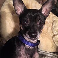 Adopt A Pet :: Friego - Flossmoor, IL