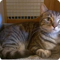 Adopt A Pet :: GRAVY - Brea, CA