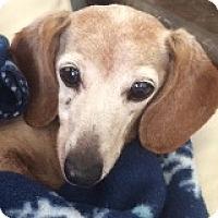 Adopt A Pet :: Margie Marshal - Houston, TX