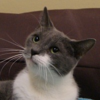 Adopt A Pet :: Elle - Dundee, MI