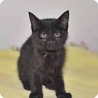 Adopt A Pet :: Cadillac - Medina, OH
