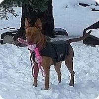 Adopt A Pet :: Aspen - Livermore, CA