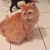 Adopt A Pet :: NY - Piper and Priscilla (CP) - Charleston, WV