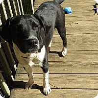 Adopt A Pet :: Harry - Windham, NH