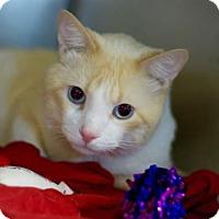 Adopt A Pet :: A - Frankie S - Rochester, MI