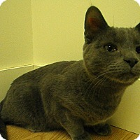 Adopt A Pet :: Teiton - Milwaukee, WI