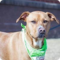 Adopt A Pet :: Rambo D2508 - Shakopee, MN