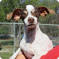 Adopt A Pet :: Cramblett - Reeds Spring, MO