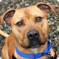 Adopt A Pet :: Humphrey - Bellingham, WA
