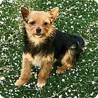 Adopt A Pet :: Blake - Henderson, NV