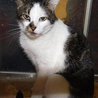 Adopt A Pet :: Armani - Logan, UT