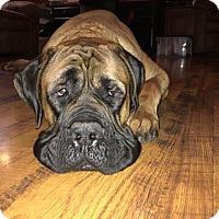Adopt A Pet :: Smalls - Chambersburg, PA
