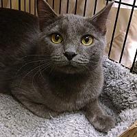 Adopt A Pet :: O'Brian - Overland Park, KS
