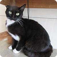 Adopt A Pet :: Sinclair $25 to adopt - North Richland Hills, TX