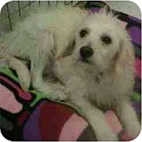 Adopt A Pet :: Isaac - Phoenix, AZ