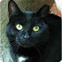 Adopt A Pet :: Inkie - Plainville, MA