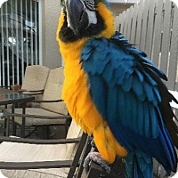 Adopt A Pet :: Jackie - Tampa, FL