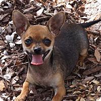 Adopt A Pet :: Laverne - La Habra Heights, CA