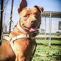 Adopt A Pet :: Mocha - Lemoore, CA