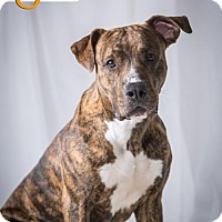 Adopt A Pet :: Betsy *Adoption Pending* - St Paul, MN