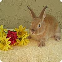 Adopt A Pet :: Fetaccini - Bonita, CA