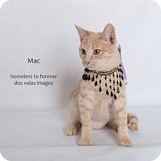 Domestic Shorthair Cat for adoption in Arcadia, California - Mac