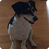 Adopt A Pet :: Charli - Corbin, KY