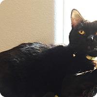 Adopt A Pet :: Valette - Colorado Springs, CO