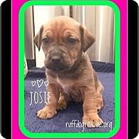 Adopt A Pet :: Josie - Milton, GA