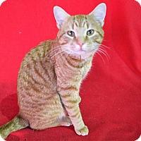 Adopt A Pet :: Morris - Mackinaw, IL