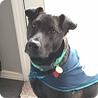 Adopt A Pet :: Mocha - Albuquerque, NM